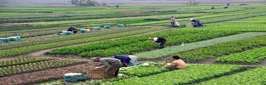 Fermierii trebuie să depună cererile pentru subvențiile la motorină pe trimestrul II!