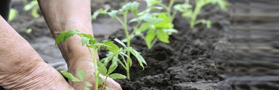 De ce NU se dau subvenții celor 2 milioane de exploatații agricole din România?