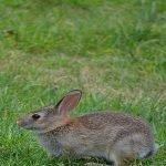rabbit-1237259_1280