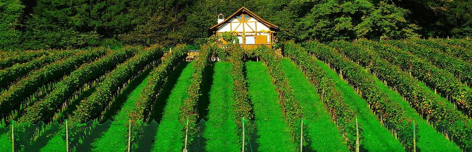 România a fost nr. 1 la cel mai mare nr. de proprietari de podgorii