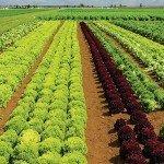 APIA: Subvențiile din AGRICULTURA ECOLOGICĂ AU FOST DEBLOCATE