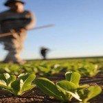 """SUBVENȚII: Vorba aia: """"Birocrația omoară!"""" Da, că-i omoară pe micii fermieri și nu numai!"""
