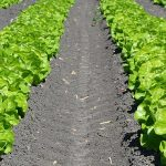 Cum fermierii români pot achiziționa pământ ieftin!