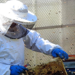 Ferma apicolă, printre cele mai profitabile afaceri de azi!