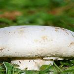TOTUL despre afacerile cu ciuperci