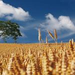 Cel mai ieftin teren agricol poate fi cumpărat la…