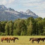 Fermierii din zonele montane vor primi 1 miliard de euro