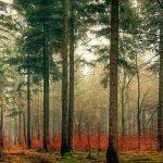 România a exportat mai puțin lemn în 2017