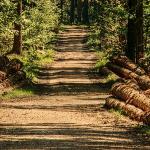Romsilva: Românii ar putea să rămână fără lemne de foc