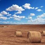 APIA oferă adeverințe pentru fermierii care contractează împrumuturi