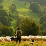 Fermierii nu vor mai putea să vândă terenurile lor agricole pentru 15 ani