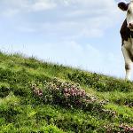 Excesul de proteine la animale, poate avea consecințe foarte grave