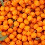Cătina, fructul minunii! Cum o creștem și ce beneficii are ea asupra corpului