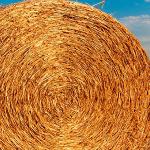 România ar putea fi eliminată de pe piața internațională