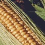 Investiții imense de MADR în programele de consiliere a producătorilor agricoli