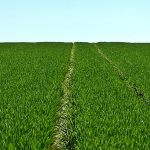 Măsurile de climă și mediu care TREBUIE îndeplinite de fermierii români