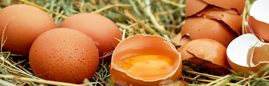 4 milioane de ouă contaminate cu fipronil și salmonella