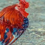 A început perioada de depunere pentru subventiile acordate bunastării animalelor
