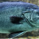 Inagurarea Bursei de Pește nefuncțională