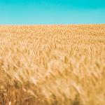 Agricost exportă mult din producție în țările arabe