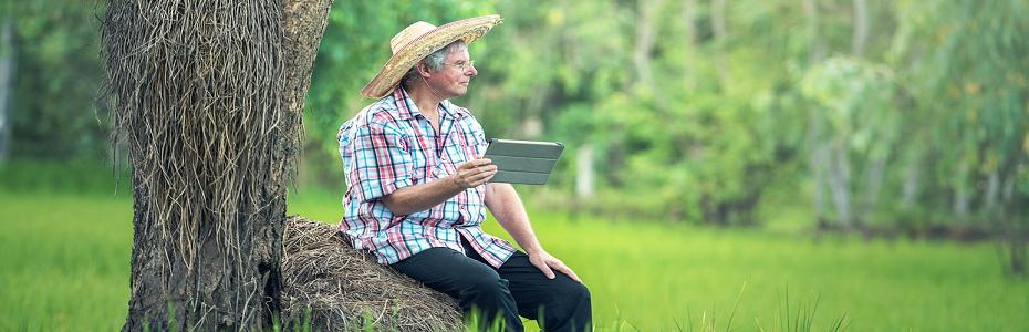 O bună parte dintre români se ocupă cu agricultura