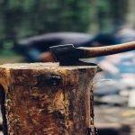 Pădurile din România: din ce în ce mai aproape de extincție