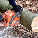Silvicultorii protestează din nou, după ce un alt pădurar a fost ucis de hoții de lemne