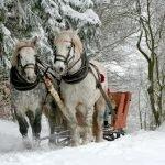 Subvenții pentru crescătorii de cai