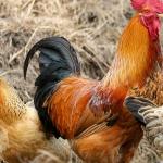 Cât de grav e afectată agricultura de NOUL CORONAVIRUS?