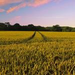 Universitatea din Craiova oferă gratuit răsaduri fermierilor