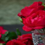 Butași de trandafiri buni și ieftini. TOP GREȘELI la planterea lor