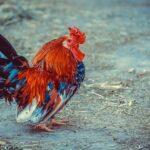 Termen limită pentru subvențiile 2021 pe hectar și pe cap de animal